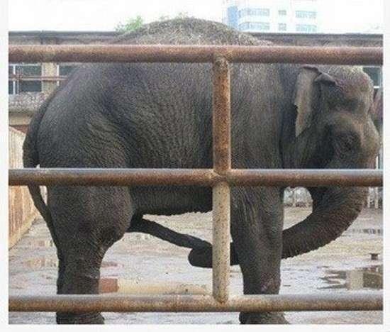 является стояк у слона фото всё запросу