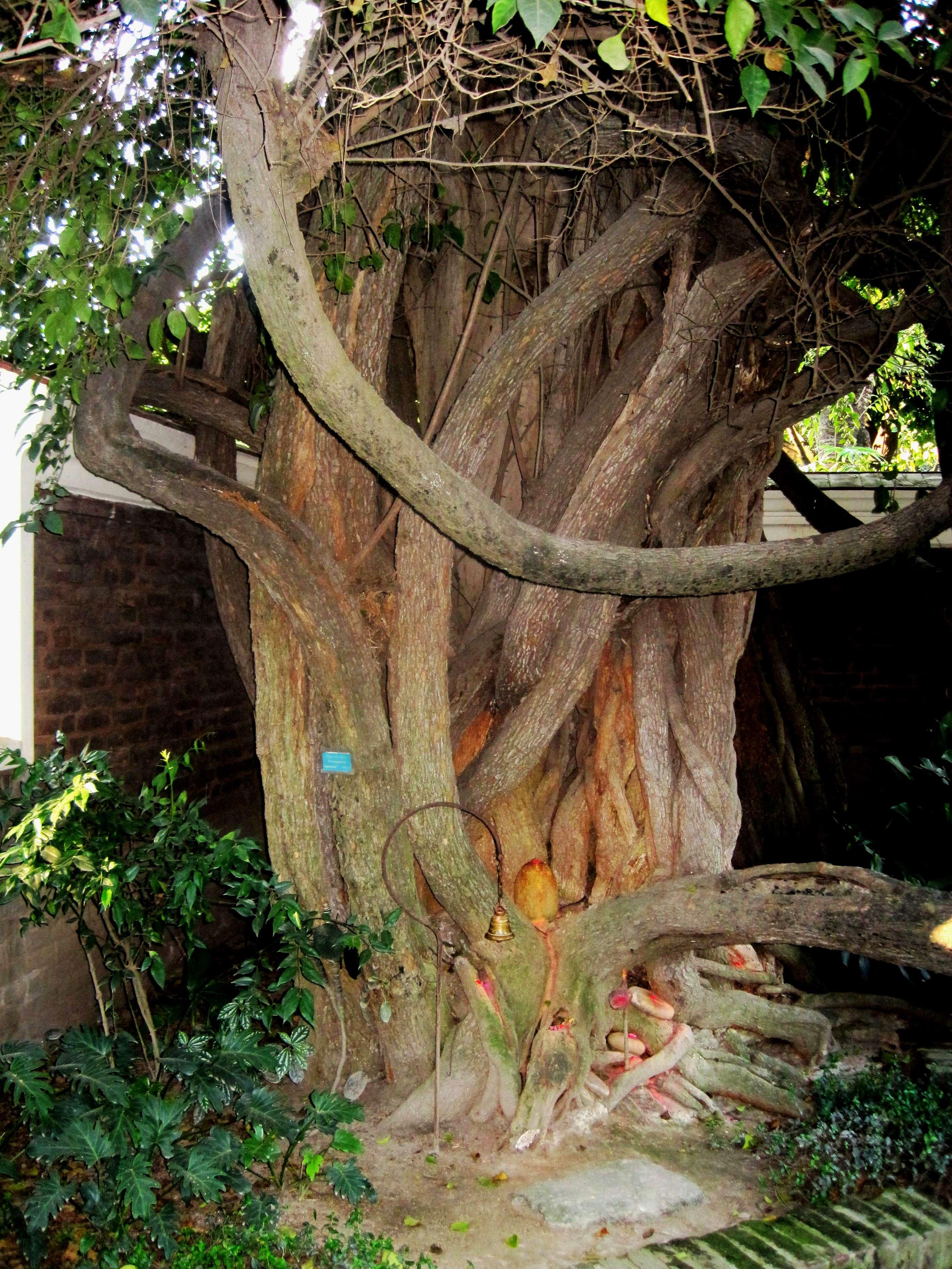 Kathmandu Garden of Dreams | Nepal Cultural Heritage Landmark.
