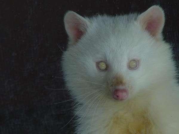 Albino Animals Beautiful Photos Page 1